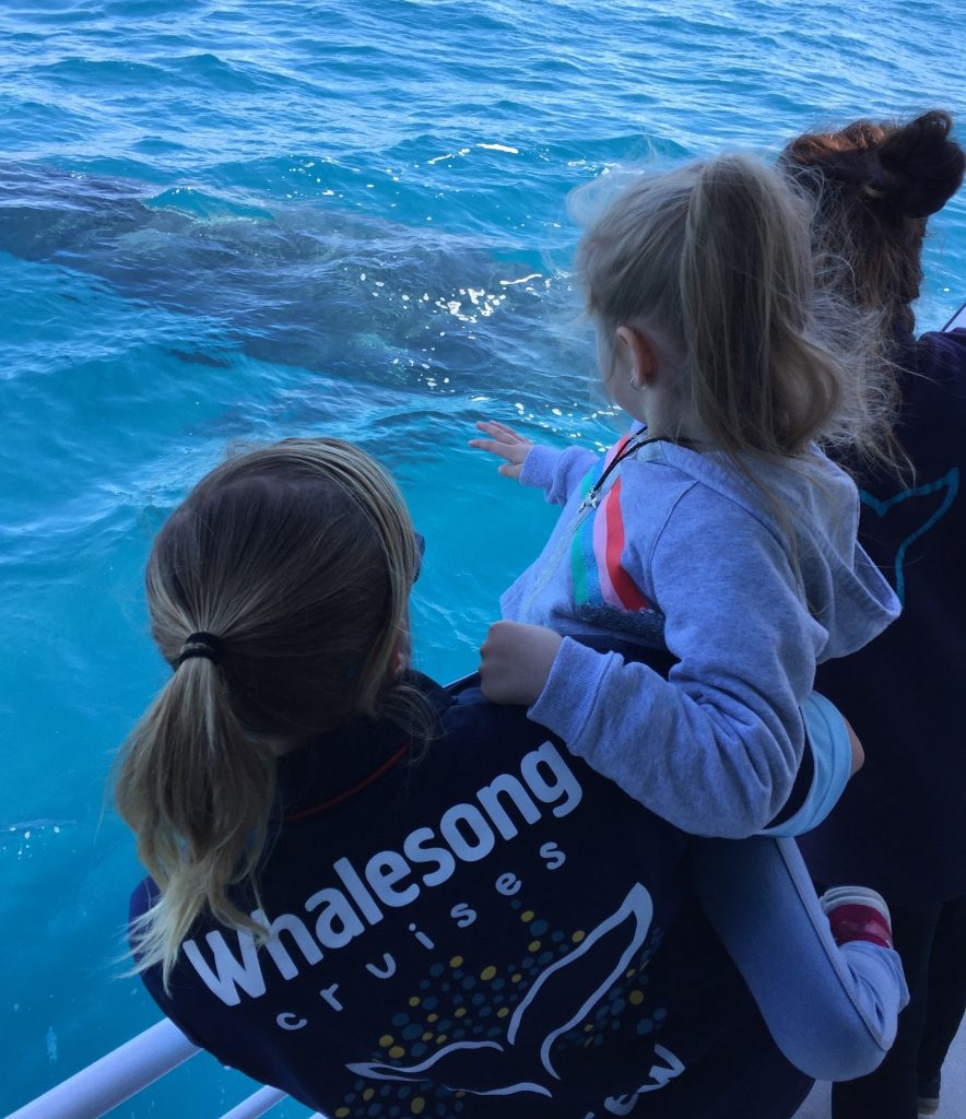 Whalesong Cruises Hervey Bay best value humpback whale watching compassionate crew