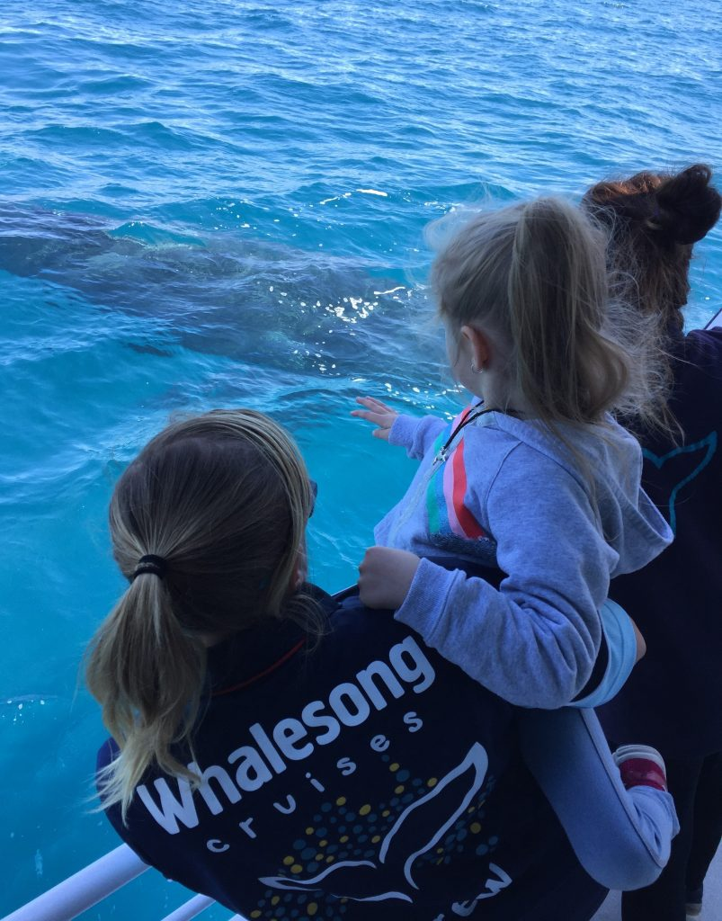 Whalesong Cruises Hervey Bay - humpback whale watching child friendly
