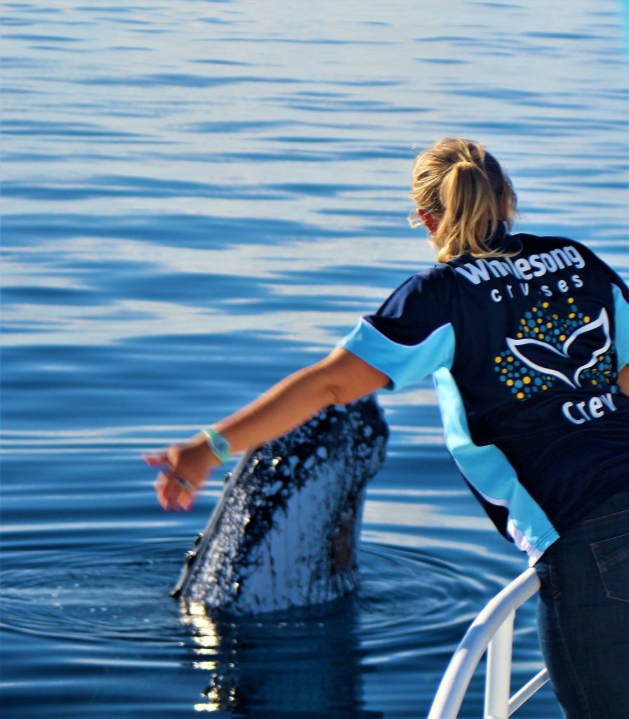 Whalesong Cruises Hervey Bay best value humpback whale watching waving hello