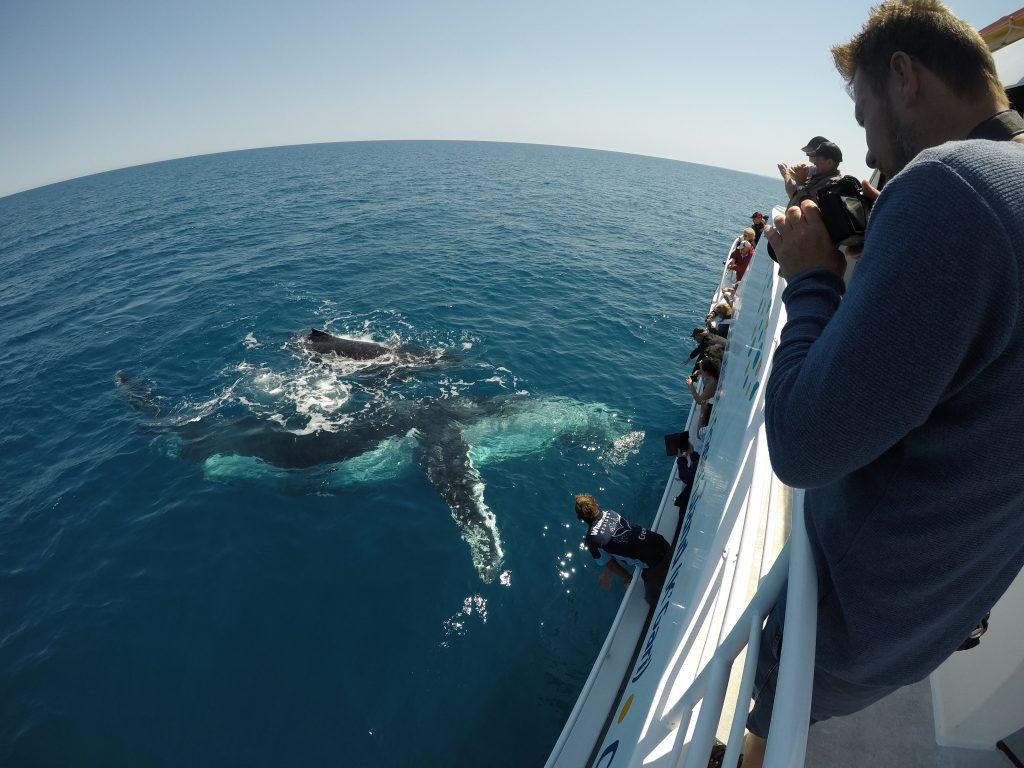 Whalesong Cruises Hervey Bay best value humpback whale watching multilevel viewing