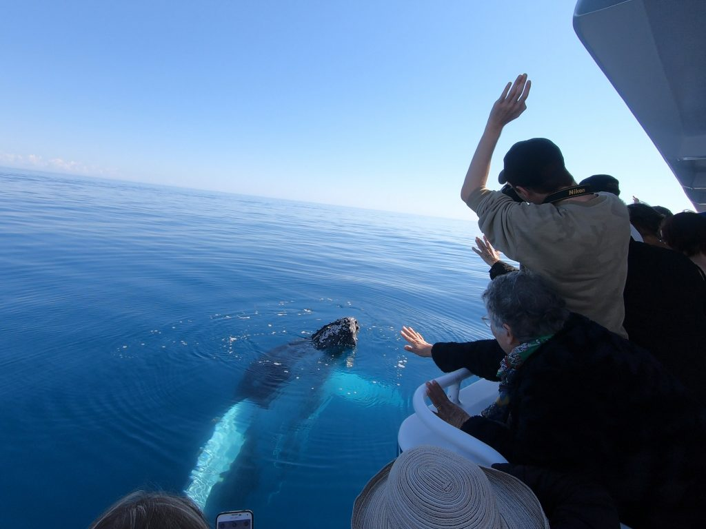 humpback whale waving at guests