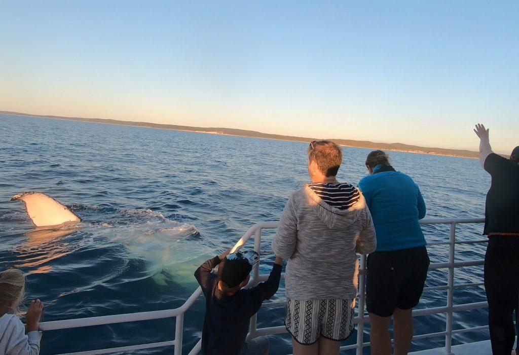 humpback whale watching sunset photographers light