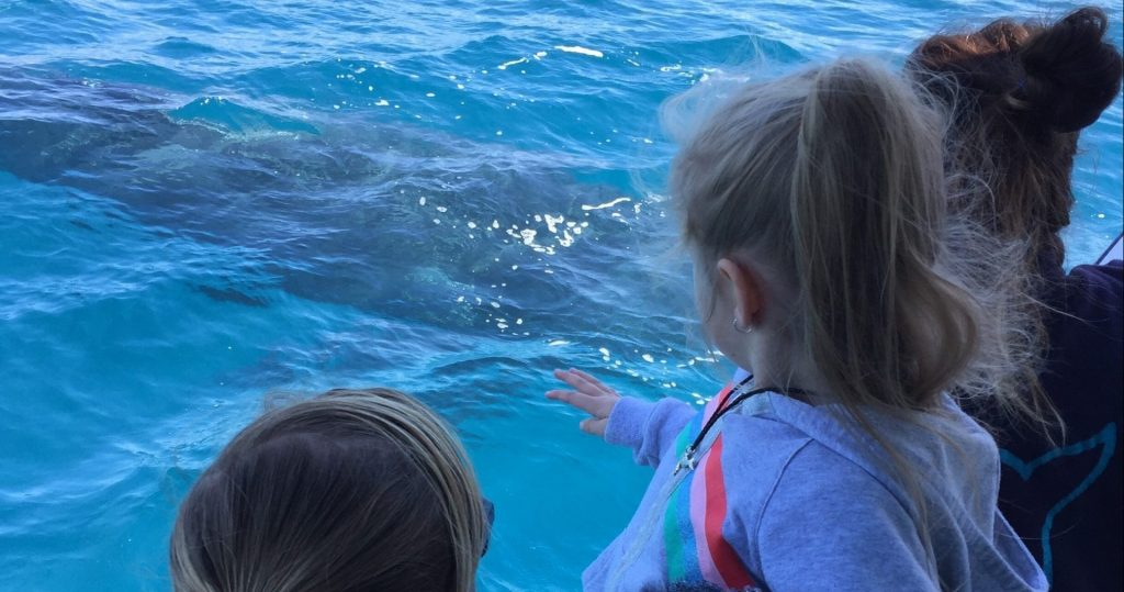 Whalesong Cruises Hervey Bay family friendly