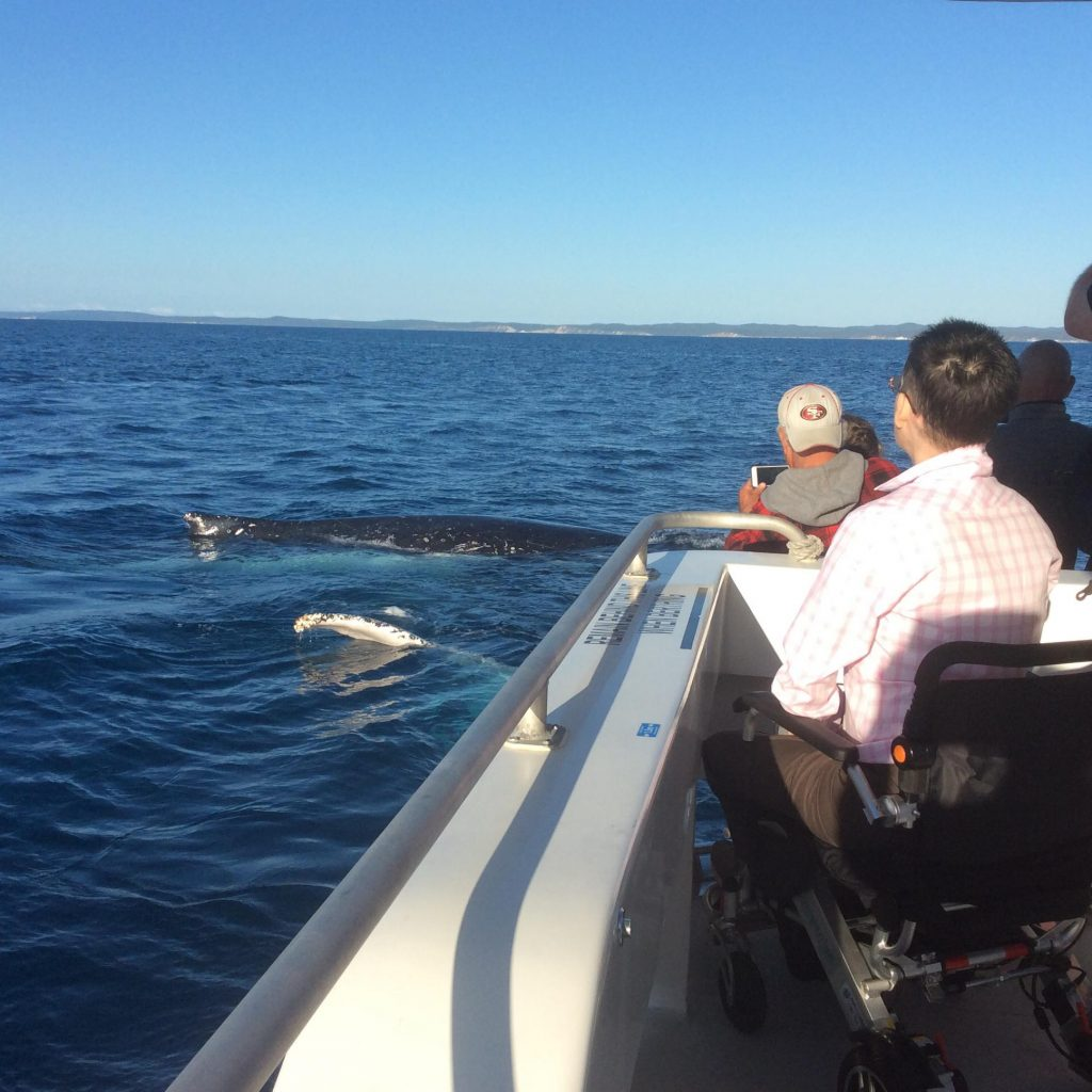Whalesong Cruises Hervey Bay Wheelchair accessible boat